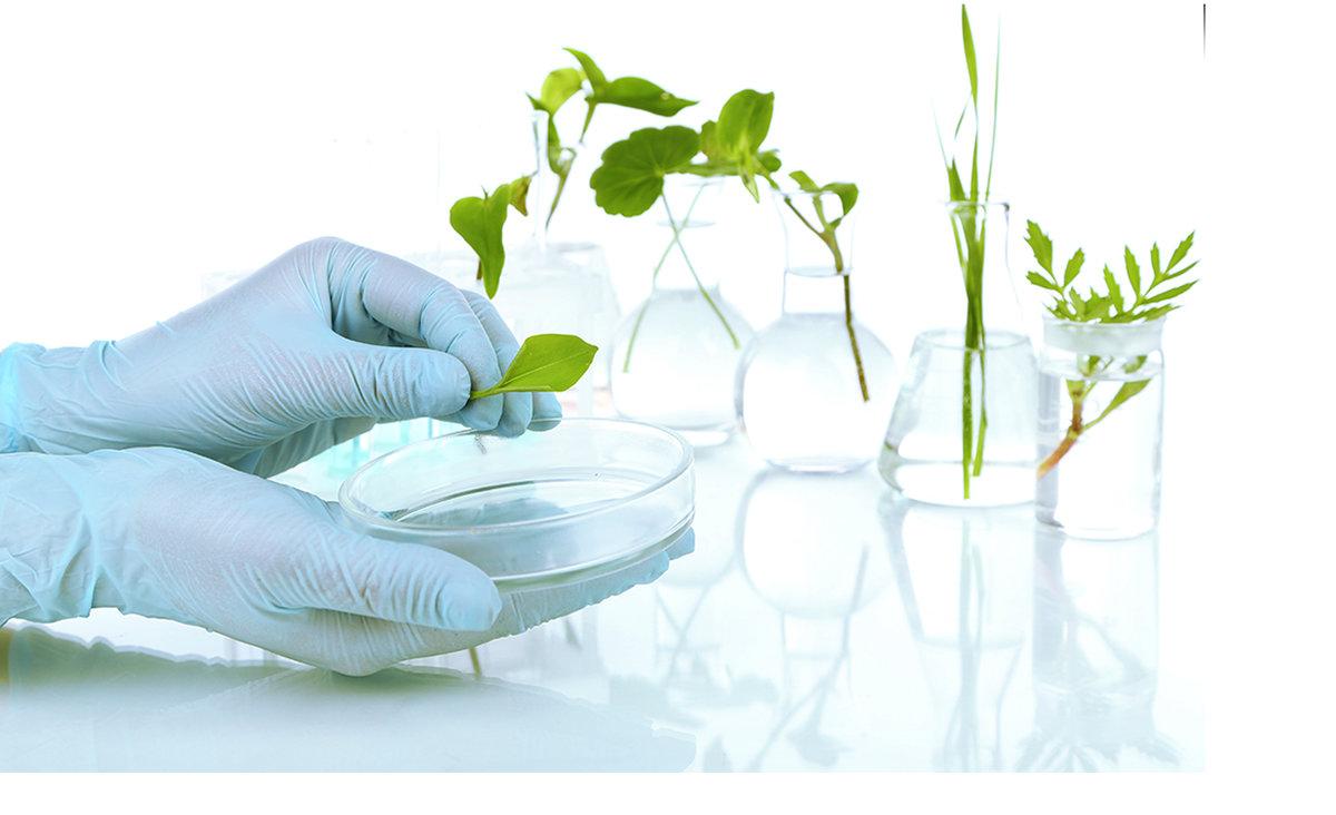 Диагностика питания растений
